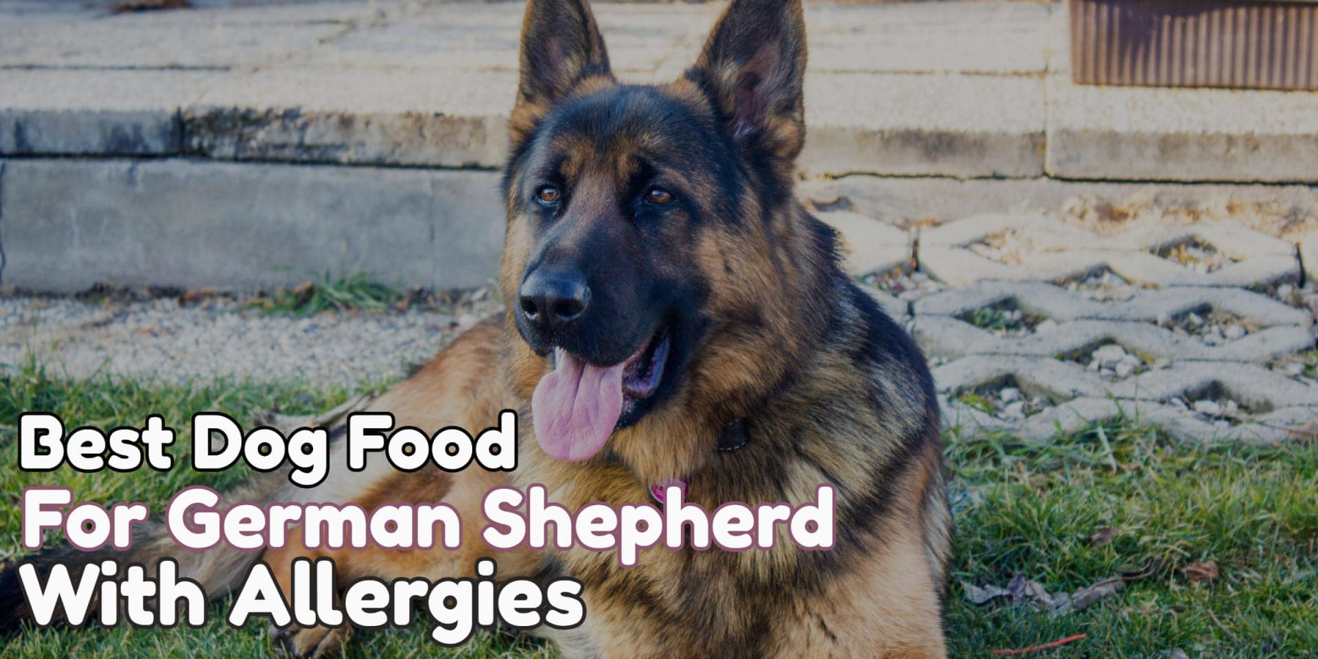 What is the Best Dog Food for German Shepherds with Skin Allergies