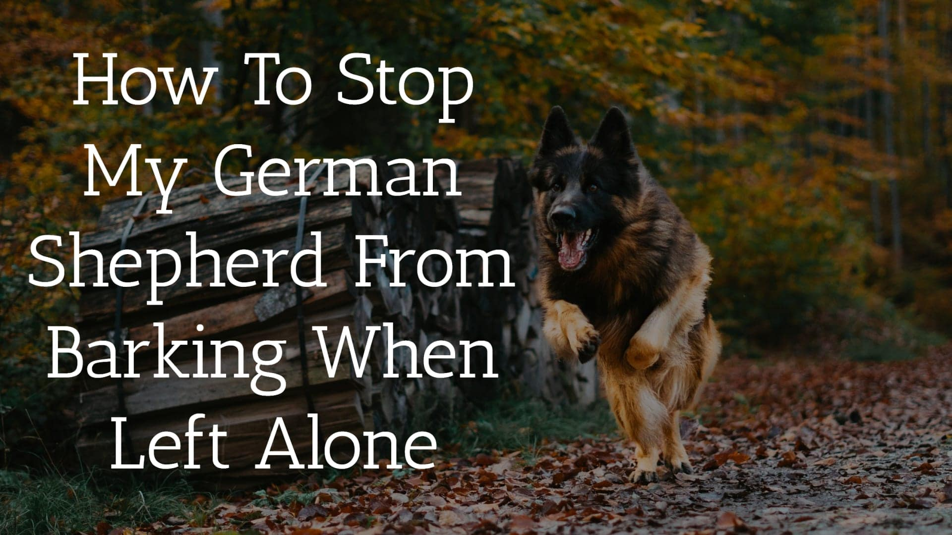 How To Stop My German Shepherd From Barking When Left Alone