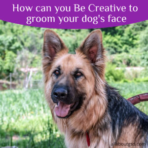 How can you Be Creative to groom your dog's face