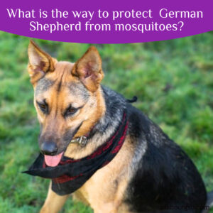 What is the way to protect German Shepherd from mosquitoes?