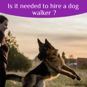 Is it needed to hire a dog walker ?