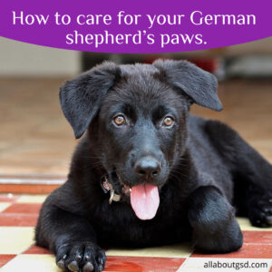 How to care for your German shepherd's paws.
