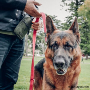 How to Sign up for an obedience training class?