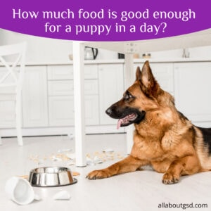 How much food is good enough for a puppy in a day?