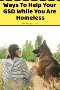 Ways To Help Your GSD While You Are Homeless