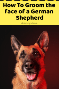 How To Groom the face of a German Shepherd
