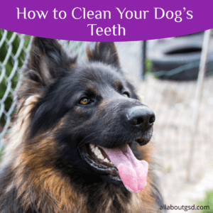 How to Clean Your Dog's Teeth?