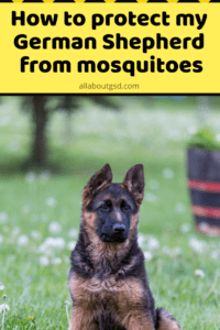 How to protect my German Shepherd from mosquitoes