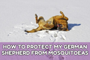 HOW TO PROTECT MY GERMAN SHEPHERD FROM MOSQUITOEAS