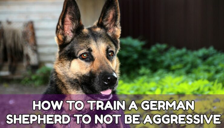 How TO TRAIN A GERMAN SHEPHERD TO NOT BE AGGRESSIVE