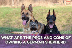 WHAT ARE THE PROS AND CONS OF OWNING A GERMAN SHEPHERD