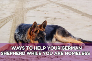 WAYS TO HELP YOUR GERMAN SHEPHERD WHILE YOU ARE HOMELESS