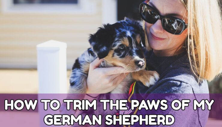 HOW TO TRIM THE PAWS OF MY GERMAN SHEPHERD