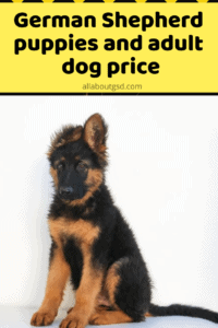 How Much does a German Shepherd Cost - German Shepherd puppies and adult dog price