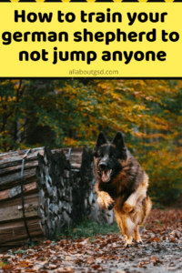 How to train your german shepherd to not jump anyone