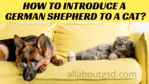 How to introduce a German Shepherd to a cat