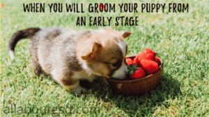 WHEN YOU WILL GROOM YOUR PUPPY FROM AN EARLY STAGE