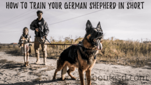 How to train your German shepherd to love cats