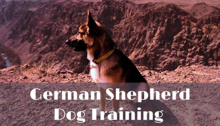 German shepherd dog and puppy training