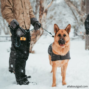 How Can You Improve Your German Shepherd Training Skills?