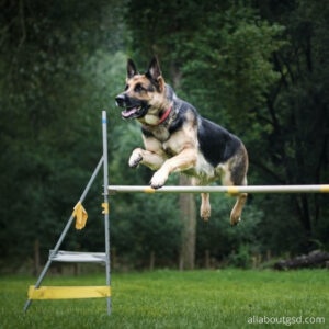 Are German shepherds easy to train?