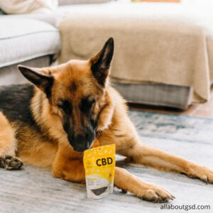 How To Train Your Dog With Reward Based Training