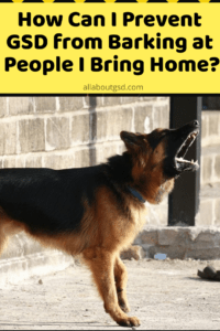 How Can I Prevent German shepherd from Barking at People I Bring Home?