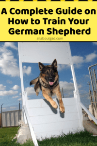 A Complete Guide on How to Train Your German Shepherd