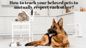 How to teach your beloved pets to mutually respect each other