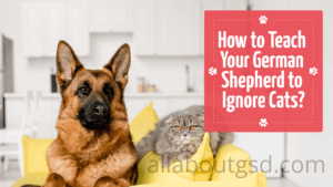 How to Teach Your German Shepherd to Ignore Cats?