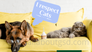 do german shepherds get along with cats