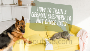 How to train your german shepherd not to chase cats