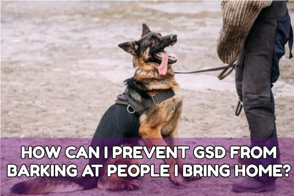 HOW CAN I PREVENT GSD FROM BARKING AT PEOPLE I BRING HOME?