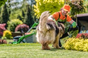 Why Is It Important to Train Your German Shepherd Dog