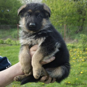 how to take care of a German shepherd puppy?