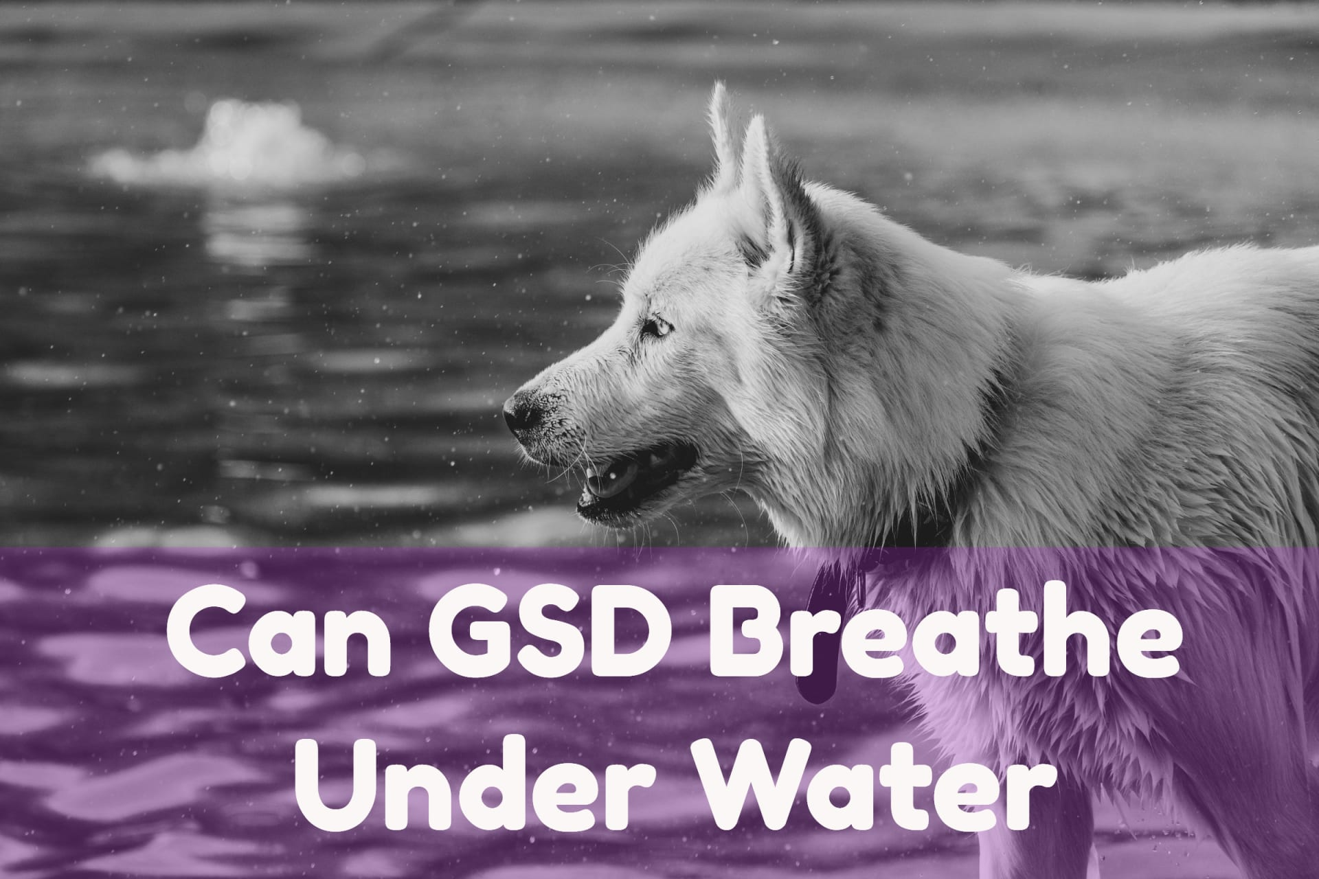 Can GSD breath under water