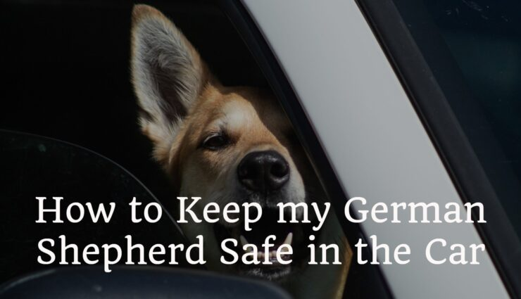 How to Keep my German Shepherd Safe in the Car