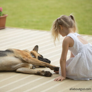 Are German Shepherds Good with Infants?