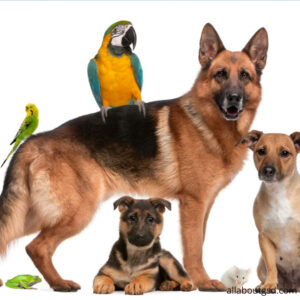 2.Are German Shepherds Good With Other Pets?
