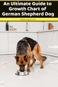 An Ultimate Guide to Growth Chart of German Shepherd Dog