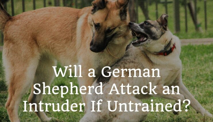 Will a German Shepherd Attack an Intruder If Untrained?