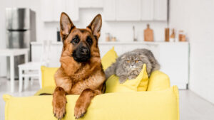 What If I Have A Cat At Home?