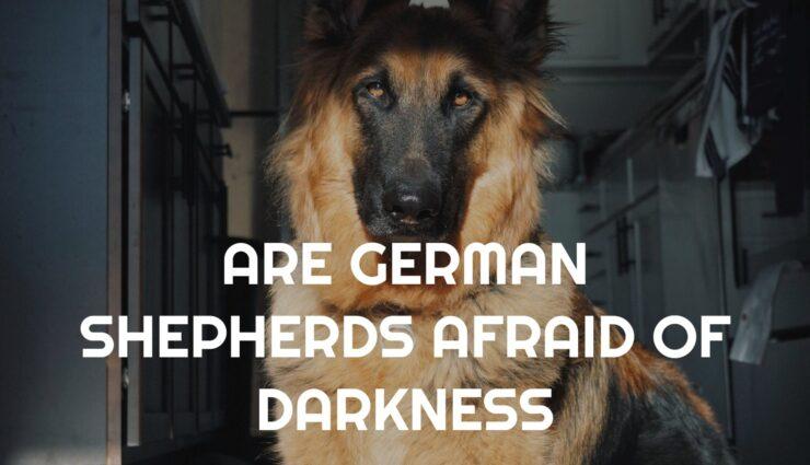 ARE GERMAN SHEPHERDS AFRAID OF DARKNESS
