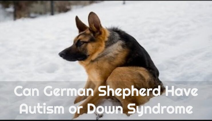Can German Shepherd Have Autism or Down Syndrome