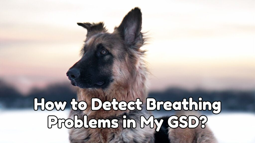 How to Detect Breathing Problems in My GSD?