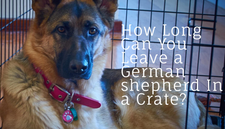 How Long Can You Leave a German shepherd In a Crate