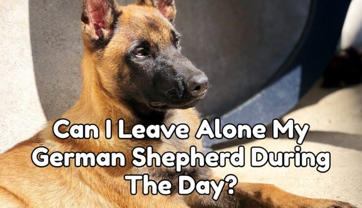 Can I Leave Alone My German Shepherd During The Day?