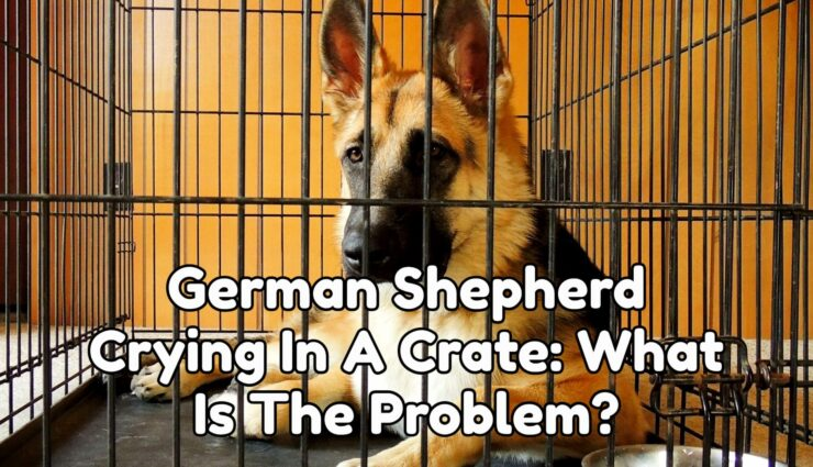 German Shepherd Crying In A Crate: What Is The Problem?