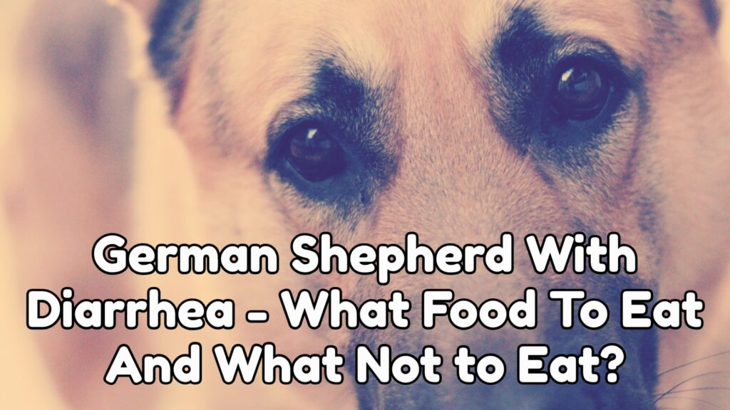 German Shepherd With Diarrhea - What Food To Eat And What Not to Eat?