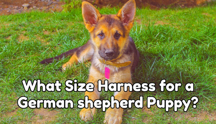 What Size Harness for a German shepherd Puppy
